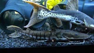 monster fish tank feeding time