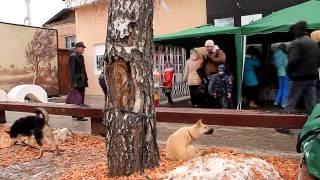Ярмарка бездомных животных в старой Коломне
