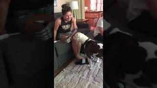 Dog is confused by bionic arm
