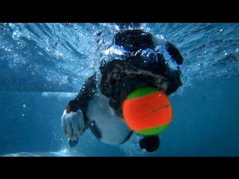 Dogs in Slow Motion - 1000fps - Orapup | DEVINSUPERTRAMP