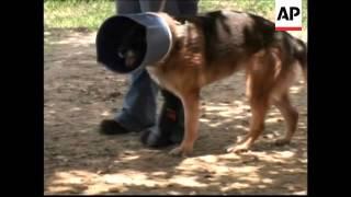 Working Dogs Face Dangers In War Zones
