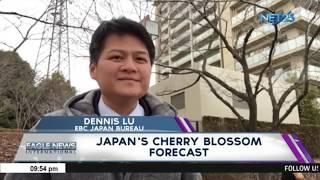 Japan S Cherry Blossom Forecast