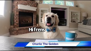 Dogs & Cat Report Heckin News