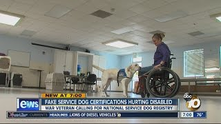 Fake Service Dog Certifications Hurting Disabled