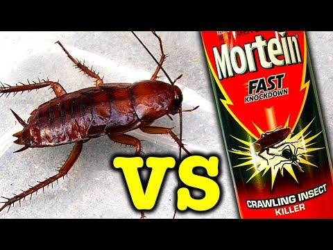 Giant Cockroach Vs Mortein Rapid Kill Bug Spray And Spiders