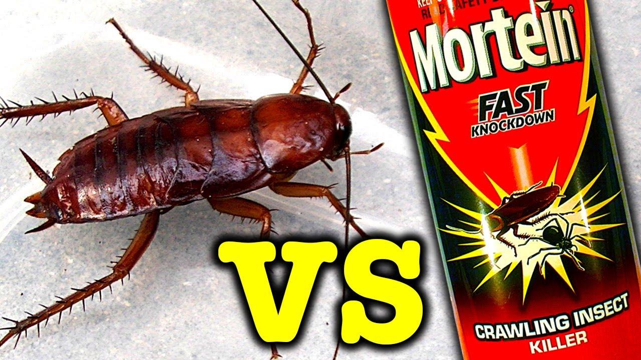 Giant Cockroach Vs Mortein Rapid Kill Bug Spray Does It Work