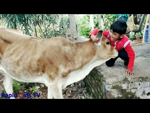 Children And Baby Cow Become Friends | Funny Babies And Pets Compilation | Caw Videos For Kids, Caw