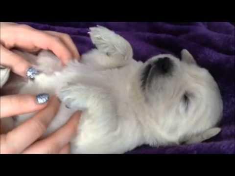 Hilarious puppy massage video
