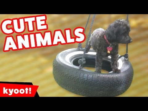 The Cutest Pets Funniest Moments & Bloopers of 2016 Caught On Tape Weekly Comp | Kyoot Animals