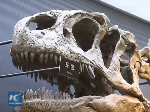 Asia's most complete raptor fossil on display