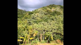 Farm for sale in Western Puerto Rico mountains near Mayaguez. Awesome views with cabin and shed.