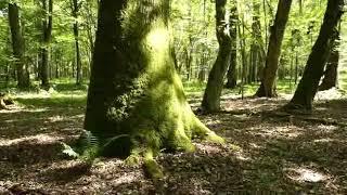 Rezerwat Dębowy Grąd