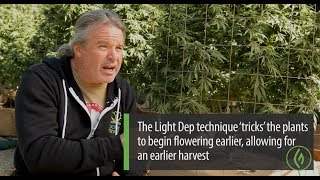 Gambar cover Cannabis Cultivation Using Light Deprivation: Kevin Jodrey - Green Flower Cultivation Course