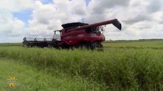 Florida Crystals Rice Farms: Learn About Harvesting