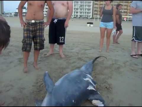 dead dolphin :(