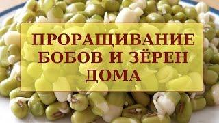 видео: Проращивание Бобовых (Маш) и Зёрен