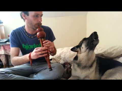 Singing dog- Luna and the Hulusi