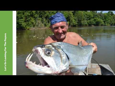Sport fishing in Guyana