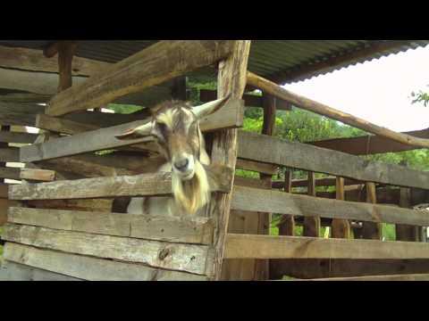 Guatemala: Livelihoods