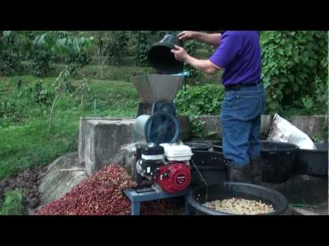 CMU Coffee Plantation Chiang Mai 0.1.mp4