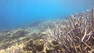 Free Dive Salimburung Island, North Sulawesi - IndonesiaHD