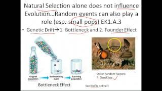 ap biology evolution and natural selection