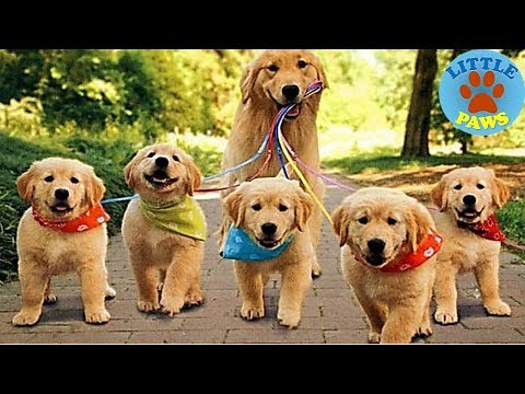Top 10 Dog Breeds for Newbie Owners
