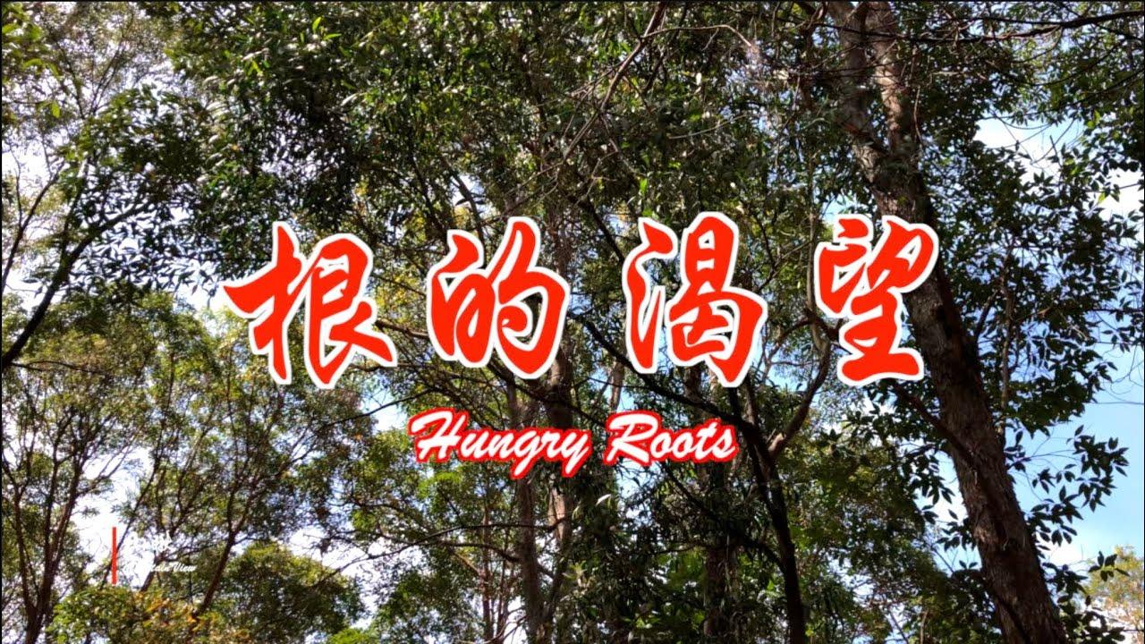 根的渴望——养土/护根/丝瓜盘根 (第58期) Hungry Roots (Ep58)