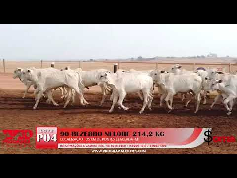 Lote P04