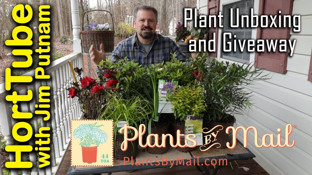 Awesome Mail Order Plant Unboxing And Giveaway Youtube