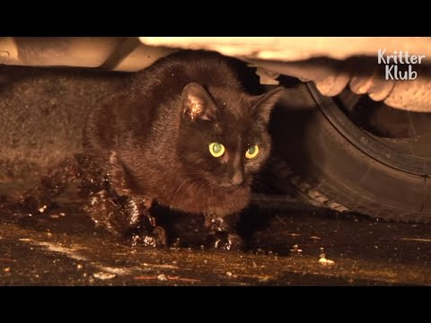 Cat Who Lost Her Kittens Cries When Embracing An Abandoned Kitten | Animal in Crisis EP59