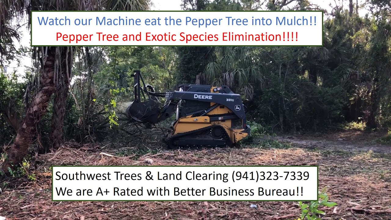 learn about Brazilian Pepper tree Port Charlotte FL, North ...