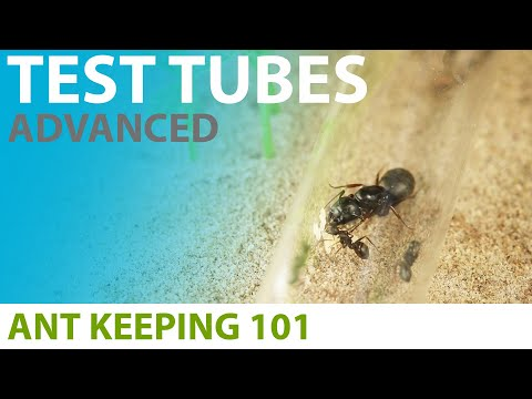 Keeping Ants In Test Tubes (Advanced Techniques) | Ant Keeping 101