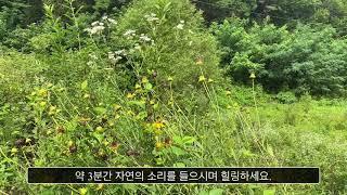 자연 asmr2 / Natur asmr2