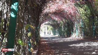 14․000 ծառ՝ Բուսաբանականում․ Պուրակը կնվիրվի արցախյան պատերազմների զոհերին և կխորհրդանշի վերածնունդ