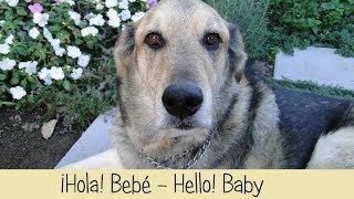 Nikko Anuncia Bebé / Nikko Announces Baby Thumbnail