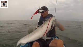 Monster Montauk Kayak Striped Bass Trolling Tube