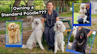 Owning a Standard Poodle? | The Worlds most BEAUTIFUL Dog!
