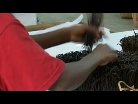 Ouganda, INSÉCURITÉ DANS LES PLANTATIONS DE VANILLE