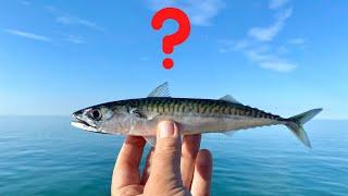 The best way t๐ catch Mackerel