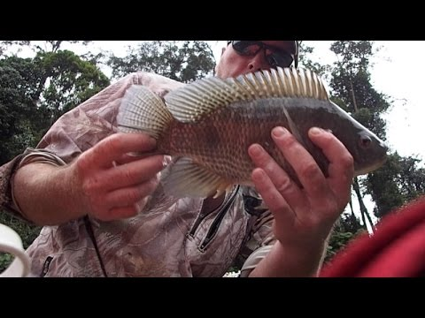 5 Minutes Of Fly Fishing - 2. Terry The Tilapia