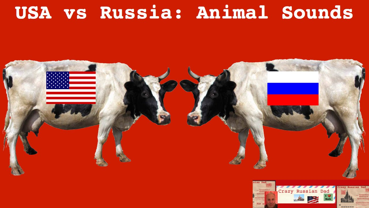 Russia vs usa dating
