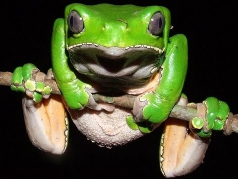 Top 5 Reasons You Should Inject Frog Poision In Your Burn Wounds. KAMBO!
