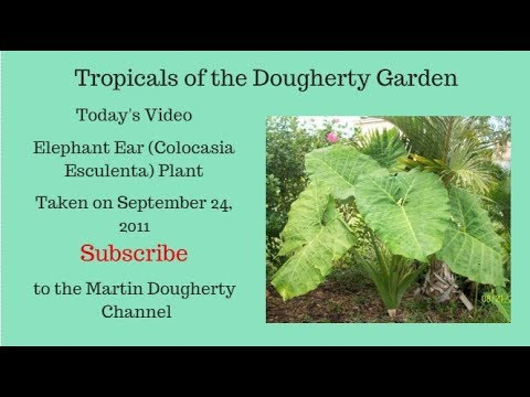Tropical Plants of the Dougherty