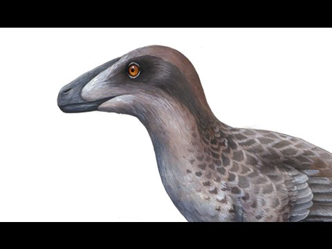 What did feathers look like on Velociraptor?