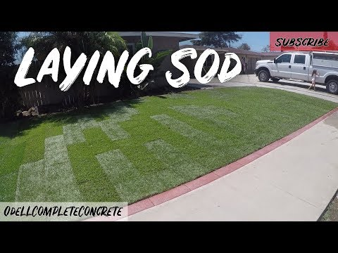 How to Lay Sod Marathon Grass Easy Guide Part 4