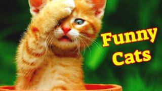 Funny Cats | Funny Cat Videos | Funny Cat Videos 2021