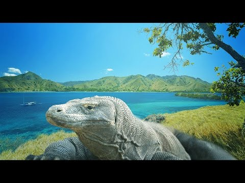 Komodo Island - Adventure in the land of dragon HD
