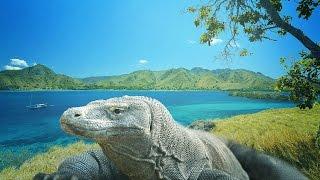 Komodo Island - Adventure in the land of dragon HD