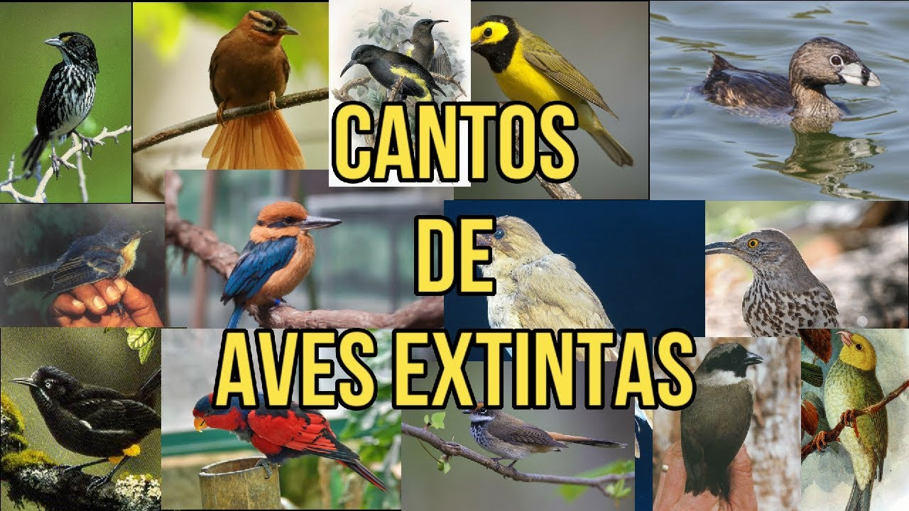 Los Cantos de 14 Aves (Probablemente) Extintas
